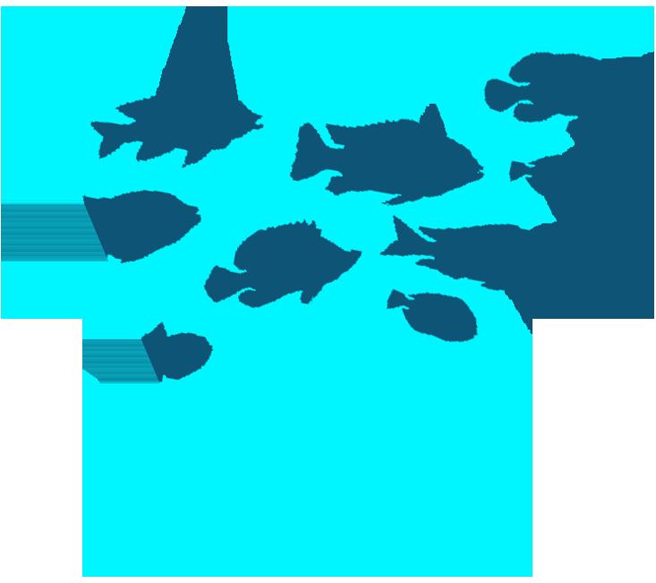 WILD WILD WANDERER